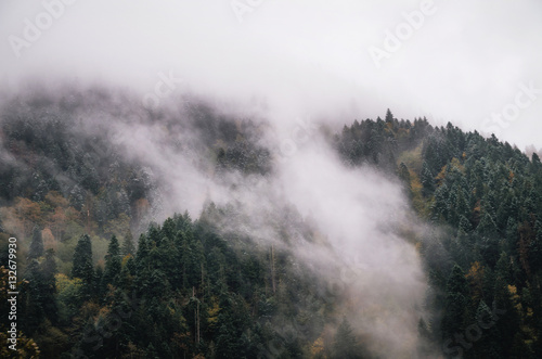 Snowy trees in a fog cloud on the mountain, Evergreen Forest in winter, Racha, Georgia - 132679930