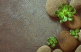 Spa background with stones and succulents - 132681749