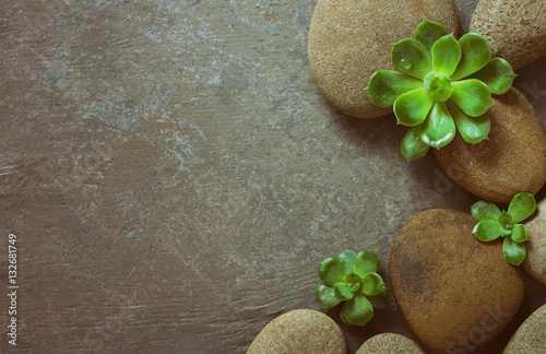 Spa background with stones and succulents