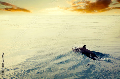 Poster Dolphin jumping in the ocean at sunset. Maldives
