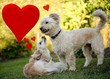 Valentines Day Dogs in love. Cute Puppy's posing for Valentines day. Room for your text.