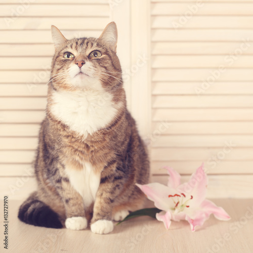 Poster Cat with flower