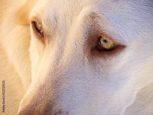 mirada triste de perro abandonado