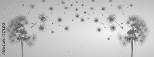 Dandelion on grey background. Flying spores. Concept of wishing, tenderness and summer time. - 132732701
