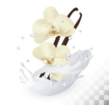 Vanilla sticks with flowers in a milk splash on a transparent ba