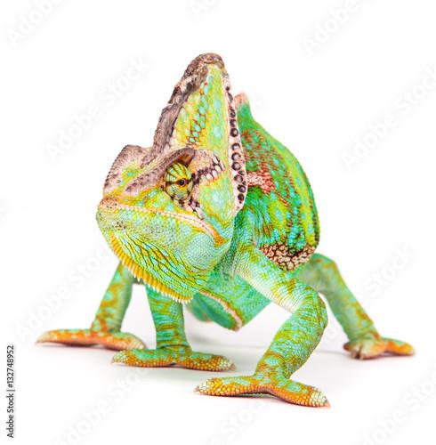 Fotobehang Kameleon Veiled chameleon (chamaeleo calyptratus) close-up.
