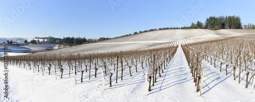 Vineyard Winter Snow In the Grape Fields of Western Oregon