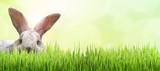 Osterhase versteckt sich im Gras