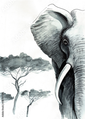 African elephant - 132785566
