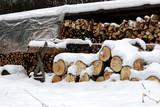Chopped firewood woodpile