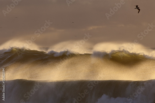 Poster Backlit stormy wave spray at sunset