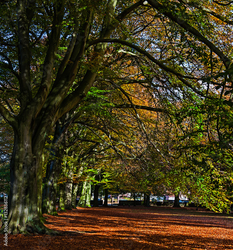 Autumn Colours in Calderstones Park, Liverpool, England. Poster