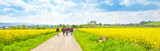 Fototapety Wanderweg im Frühling