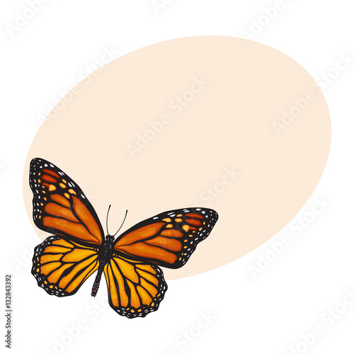 Fotobehang Vlinder Top view of beautiful monarch butterfly, sketch illustration isolated on background with place for text. color Realistic hand drawing of monarch butterfly on white background
