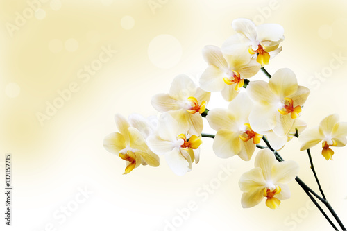 Beautiful white orchid - 132852715