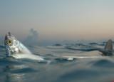 Tiburón limón en Bahamas