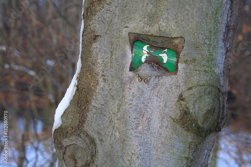 Poster View of a metal shield embedded in a tree with the number 83
