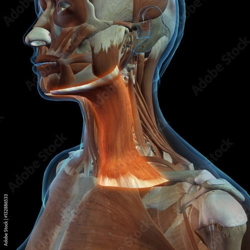 Female Neck Platysma Muscle | Buy Photos | AP Images | DetailView
