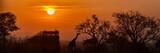 Afrykańska Safari Słońca Silhouette