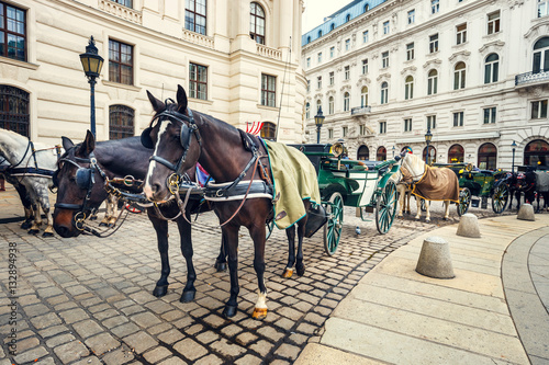 Poster Horse-driven carriage at Hofburg palace in Vienna, Austria