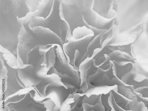 czarny-i-bialy-popielaci-platkow-kwiaty-w-miekkiej-czesci-projektuja-dla-tla