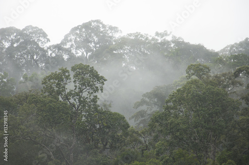 Misty forest landscape, Thailand - 132918345