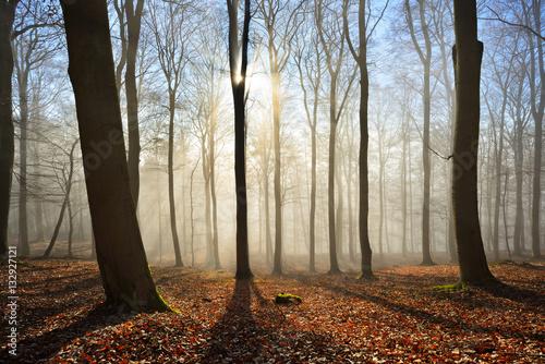 Kahler Buchenwald im Winter, Sonnenstrahlen dringen durch Nebel