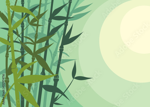Beautiful Bamboo Background