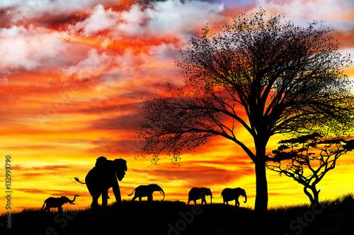 Poster paisaje con animales salvajes