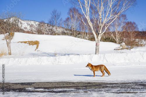 Poster 雪原のキツネ