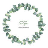 Watercolor vector round wreath with silver dollar eucalyptus. - 133061378