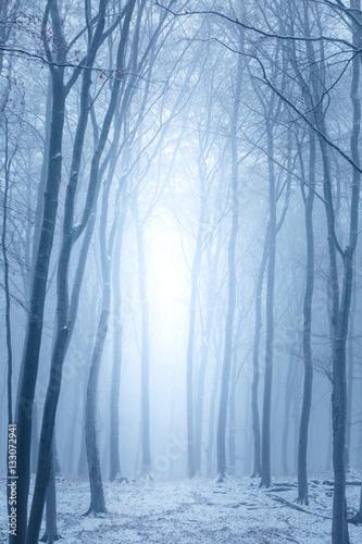 Aluminium Betoverde Bos Hochformat, der Wald im Winter