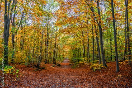 Las w jesiennych barwach