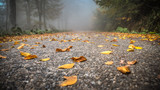 Sapanca, Turkey - October 10, 2013: Road covered with yellow, orange and red autumn leaves