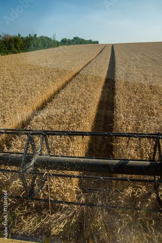 Poster Moisson de blé