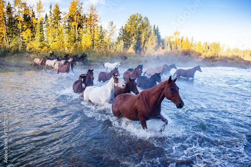 Poster Horses Crossing a River in Alberta, Canada