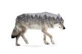 wolf double exposure