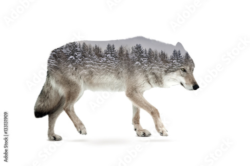 Fotobehang Wolf wolf double exposure