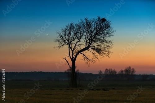 Venus and tree.