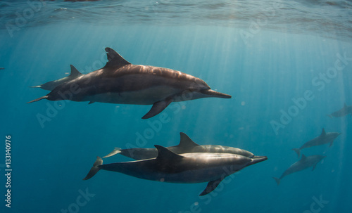 Fotobehang Dolfijn Delfini
