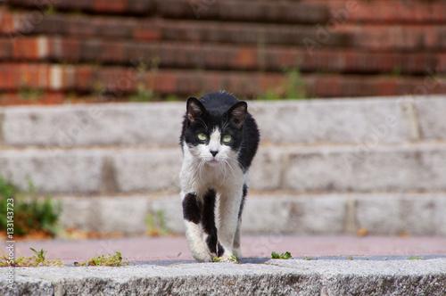 Poster Gato callejero