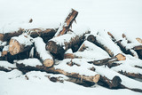 Pile of wood logs under snow