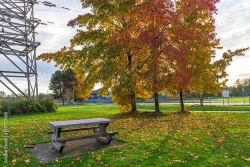 Poster Natural during autumn in Vancouver Canada Oct 2016