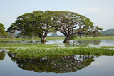 Lake landscape - gigantic trees with water reflection