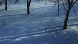 Winter in the park, trees casting shadows on white snow, time lapse footage