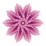 Blend vector flower in purple color