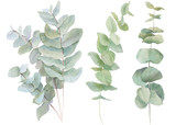 watercolor illustration leaves - 133287168