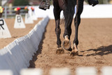 Close up image of a horse hooves in action - 133297331