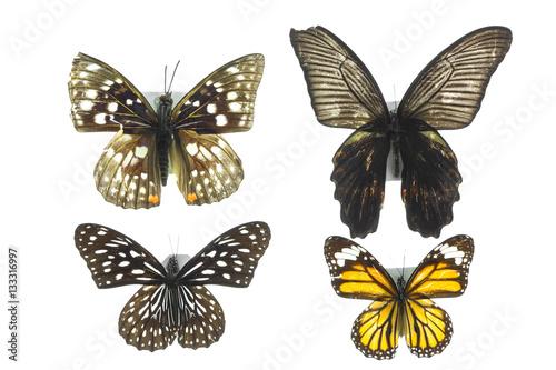 бабочка, коллекция бабочек на белом фоне изолированных Poster