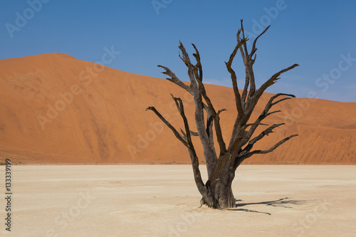 Poster Arbre fossile dune Deadvlei Namibie